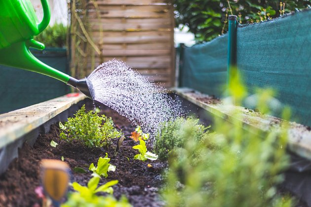 Po výsadbě můžete rostliny řádně zalít i zamulčovat.