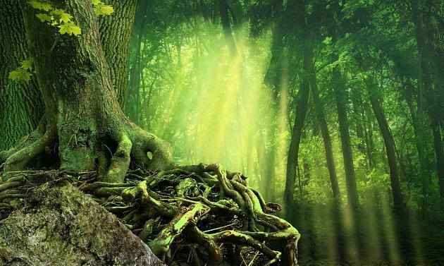 Každý strom vyjadřuje charakter člověka. 13 znamení v roce.