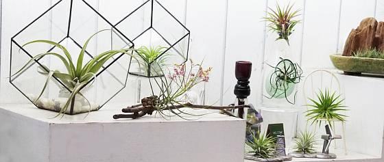 Aerárium je originální doplněk do interiéru