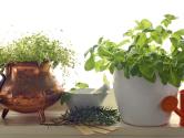 Pěstování bylinek na parapetu i na balkoně není obtížné