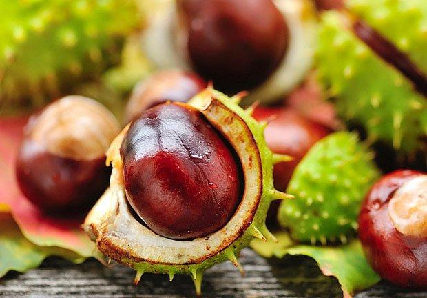 Plody, kaštany, se využívají na mnoho způsobů