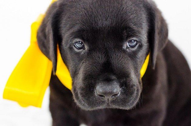 Žlutá stužka u psů říká: Potřebuji prostor!