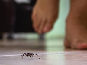 Vyžeňte pavouky z domu či bytu jednou provždy.