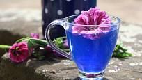 macerát i nálev ze slézu maurského (Malva mauritiana) má výjimečnou barvu