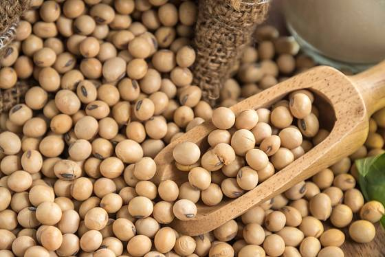 Kvalitní sója se pozná podle tvaru a barvy bobů
