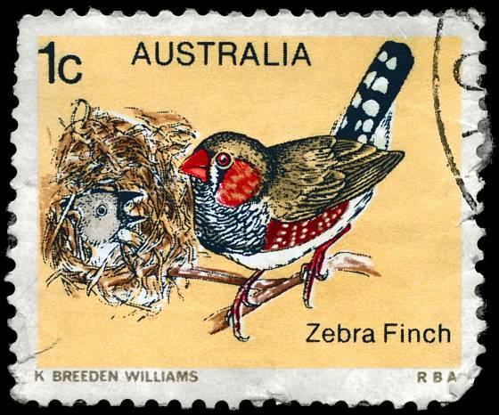 V domovské Austrálii se zebřičky ocitly i na poštovních známkách