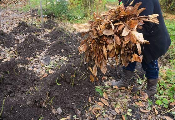 Kombinace kompostu a listí ochrání i citlivé rostliny, například choulostivější růže