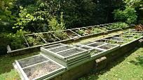 Díky studenému pařeništi můžeme rozvinout sou pěstitelskou vášeň