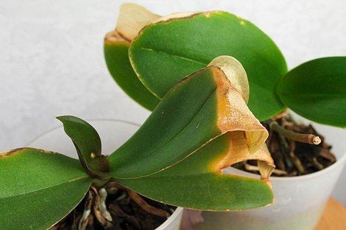 Pokud chcete udržet orchideje zdravé, musíte jim vytvořit přirozené prostředí.