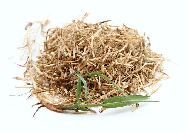pýr plazivý listy sušený