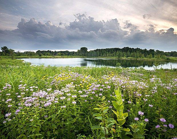 Rybník mezi loukami neošetřovanými pesticidy a nehnojenými bude čistý spíše, než ten mezi poli