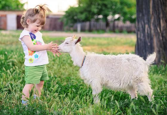 Setkání s kozou