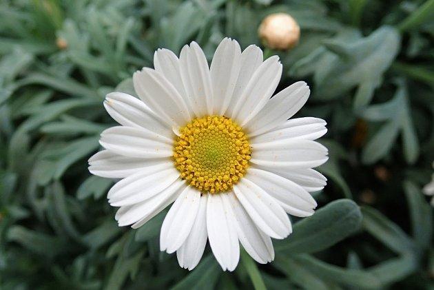 Rozmnožujte semeny, jež v březnu vysejte