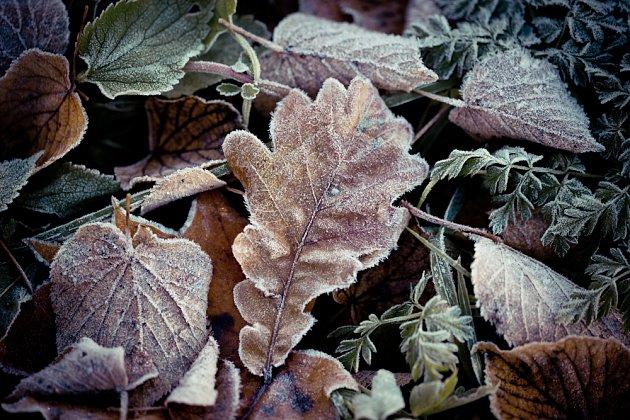 Listí je užitečný i pohledný mulč, jen z hladiny jezírka ho pravidelně odstraňujte