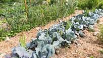 Sláma chrání půdu před vysycháním i erozí