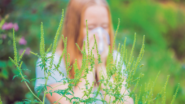 Zahrada pro alergiky rozhodně nemusí sestávat jen z kamínků, keřů a nízkého trávníku.