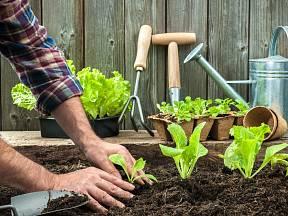 Na záhony lze v průběhu dubna vysévat a vysazovat téměř všechny druhy zeleniny