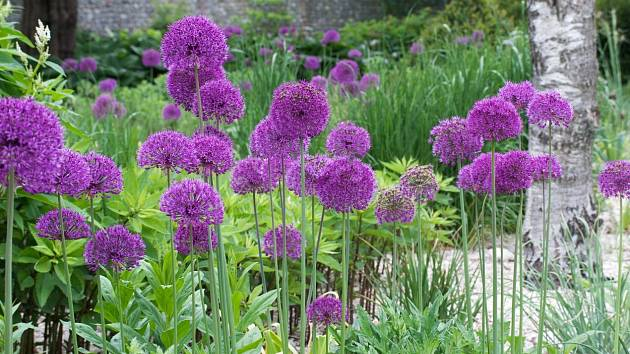 Trvalky jsou skvělé. Potvrzují to rok co rok, jakmile vykvetou a promění nudnou zahradu v barevný ráj