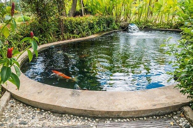 Vhodnou prevencí můžeme předcházet přemožení a likvidaci řas v zahradním jezírku.