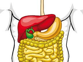 žaludek a střeva
