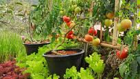 plodná zeleninová zahrádka