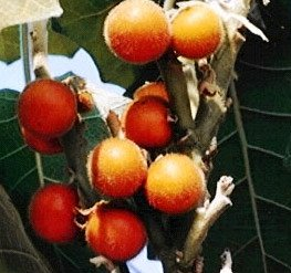 narančila