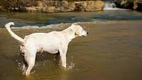 Psi, kteří milují vodu, uvítají osvěžení v řece či potoku.