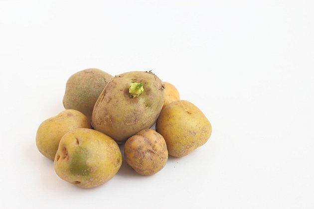 Solanin se ve zvýšené míře vyskytuje v nazelenalé slupce bramborových hlíz i klíčcích.