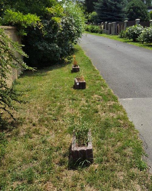 Truhlíky u silnice jsou na velmi exponovaném místě.