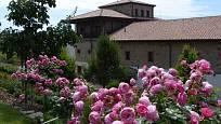 Růže odrůdy Pomponella