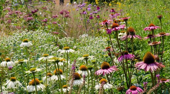Trvalková zahrada v prérijním stylu kvete po celé léto