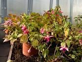 Skleník je vhodné zimoviště pro nejednu citlivější rostlinu.