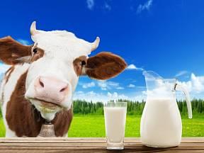 Kravské mléko bez pasterizace nás může otrávit