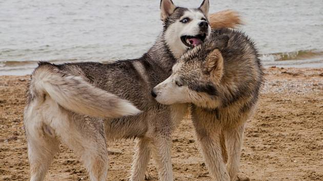 Sexualita je přirozenou vlastností všech živých bytostí, psy nevyjímaje