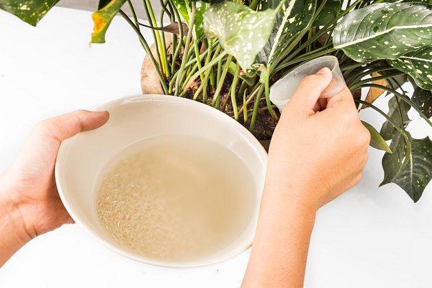 Vodu, v které jsme namáčeli rýži, můžeme použít jako hnojivo k pokojovým květinám.