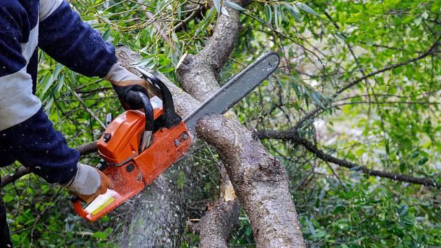 Šetrné odstranění větví znamená, že je nebudete lámat, opalovat či polévat jedem.