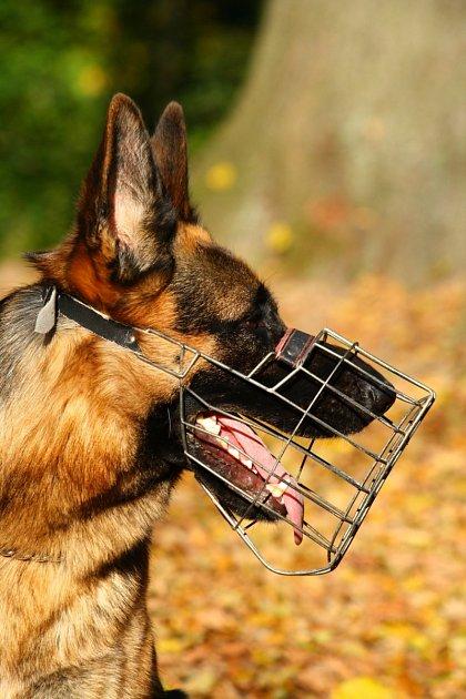 vhodný košík pro psa