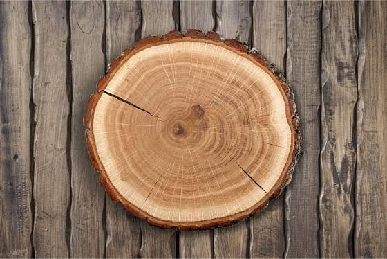 Pokud má plát dřeva také hezkou neoloupanou kůru, můžeme ho nechat po obvodu bez přizdobování.