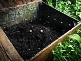 Horké kompostování zničí semena i zárodky chorob.