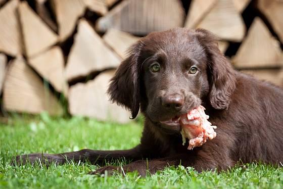 Nebezpečí se může skrývat ve volně pohozeném mase, buřtu nebo jiných pro psy zajímavých pokrmech.