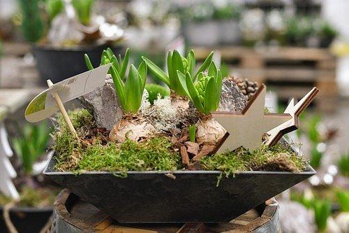 Světlo od počátku rychlení si žádají především narcisy, tulipány, zornice, kaly.