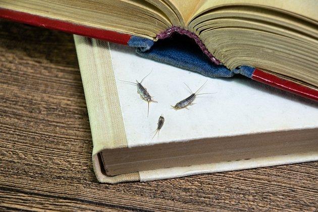 Zajímavostí je, že některé druhy žerou i papír a jsou vám schopny zničit i oblíbenou knihu.