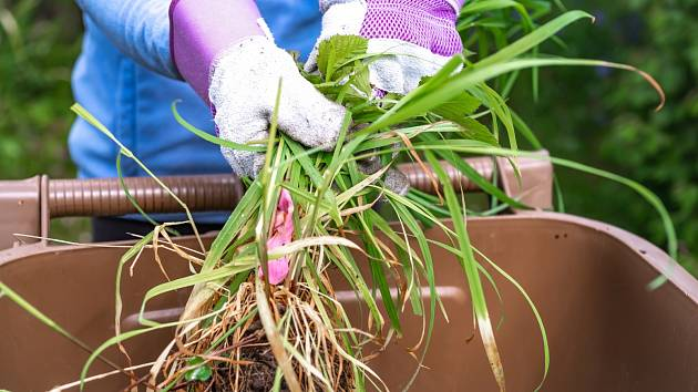 Vytrvalé plevele se vyznačují setrváváním na stejném pozemku a přizpůsobením se odlišným technologickým postupům pěstovaných plodin.