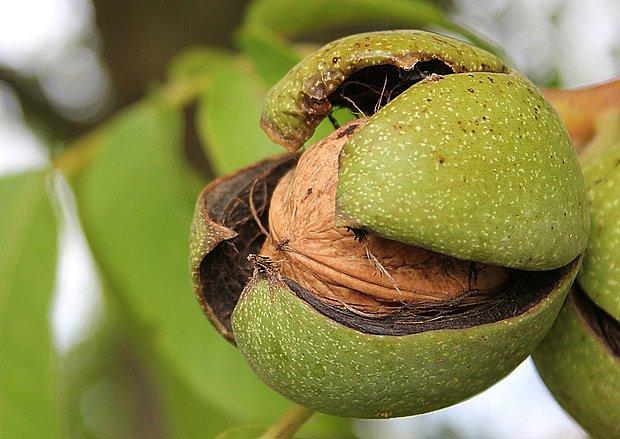 Zdravé ořechy jsou cennou pochoutkou