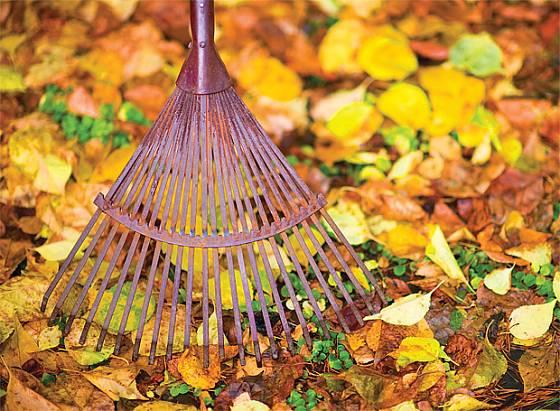 rostliny můžeme přikrýt peřinou z listí