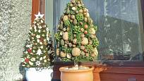 Stromky můžeme umístit v zahradě, na terase či za oknem.