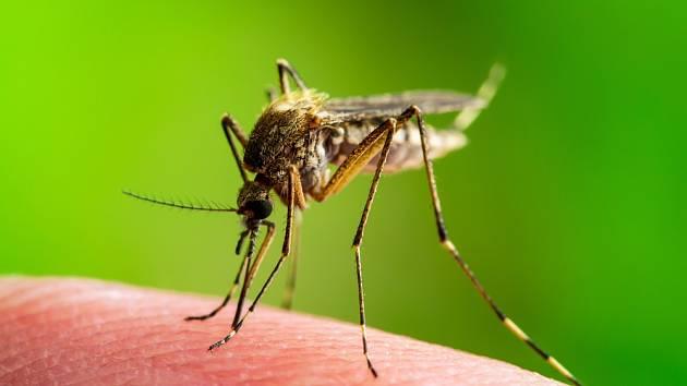 Přemnožení komáři dokáží udělat z letních nocí peklo.