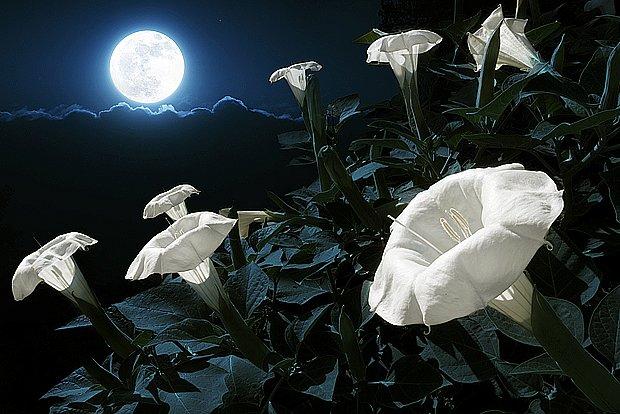 zahradničení podle lunárního kalendáře