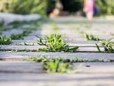 Plevel nebo mech můžeme odstranit i ručně, ale je to poměrně náročné
