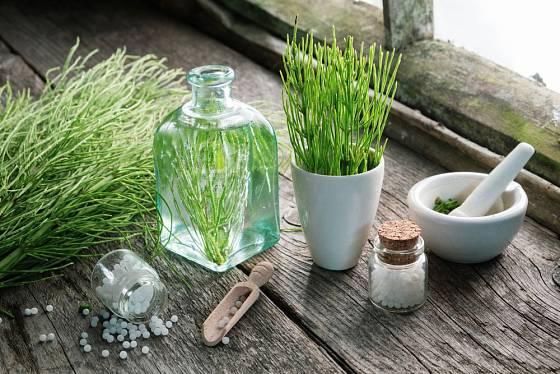 Přesličku rolní můžeme využít při péči o pleť a vlasy